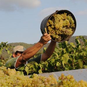 Wein aus Ibiza