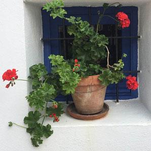 Ibiza - alles rund um Ihre Blumen