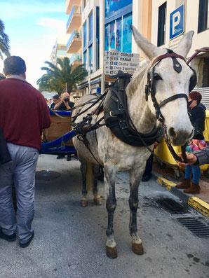 Die Gerrets treffen in Santa Eulalia ein