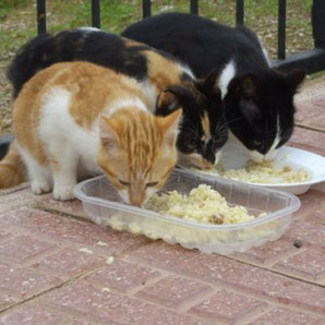 Tierarzt-Notdienst in Ibiza