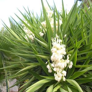 Ibiza Gartenbau und Gartenpflege