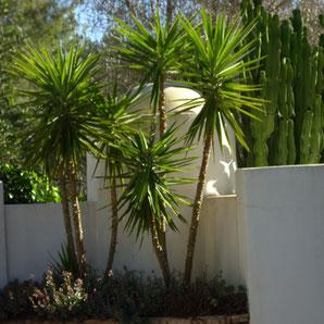 Ibiza Garten Center