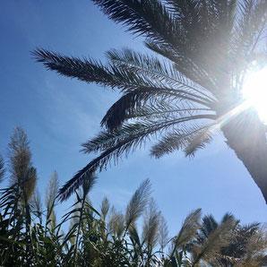 Ibiza Pool-Reparatur und Wartung