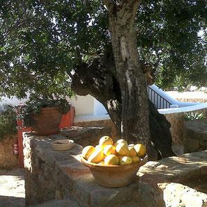 Agroturismo in Santa Eulalia