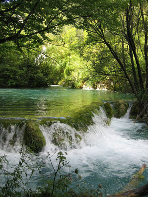 Stimmungsbild Fluss im Wald
