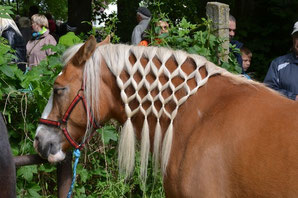 Pferdemarkt Neugattersleben - Klick!