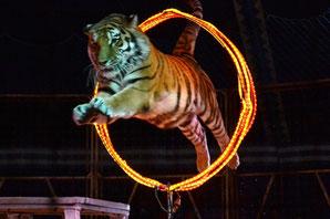 Zirkus Probst - Klick!