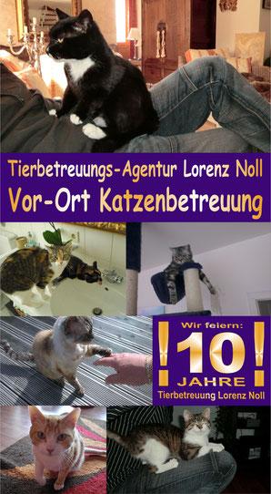 Tierbetreuung Lorenz Noll, Vor-Ort Katzenbetreuung für Frankfurt, Bad Vilben und Offenbach. Katzensitter und Tiersitter. Keine Katzenpension oder Tierpension!