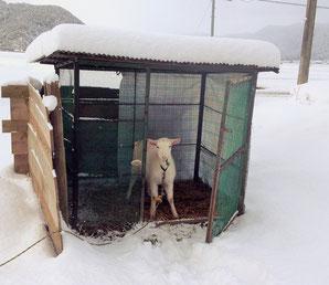 雪の中から…今年もよろしくお願いします!