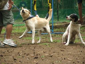 Qué tan divertidos se ven estos perros?