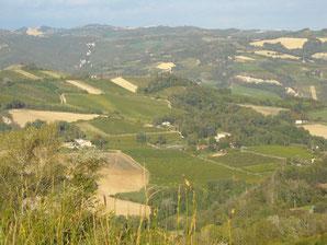 villa, raggi,  uve, sangiovese, cabernet, sauvignon, trebbiano, chardonnay, albana, predappio