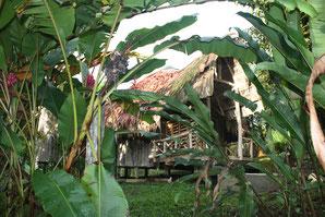 Initiative WIR SINNd: Projekt - Schutz des Regenwaldes in Costa Rica