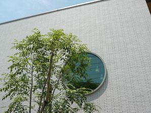 丸窓とシマトネリコ