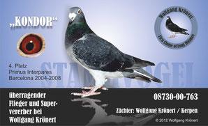 Stammvogel Kondor