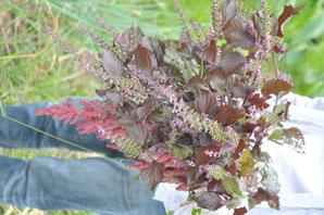自然栽培 農業体験 体験農場 野菜作り教室 赤しそ アマランス