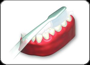 1. Kauflächen der Zähne inks und rechts, oben und unten putzen. (© proDente e.V.)