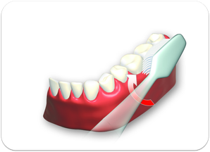 2. Außenflächen der Zähne von hinten links bis rechts hinten oben und unten putzen. (© proDente e.V.)