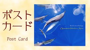ポストカード PostCard