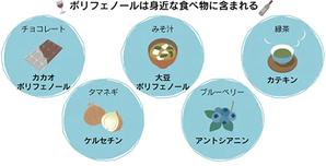 カカオ豆のすぐれた抗酸化力