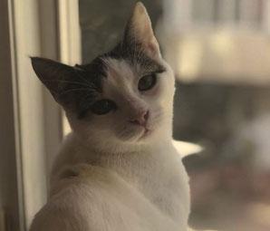 Katze Tinkerbell