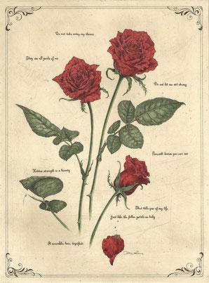 petal poetria -Rose- 腐蝕銅版画・手彩色 46x34cm 73,440円