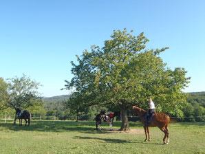 Mit Lene kurz vor Abreise auf der Pferdekoppel