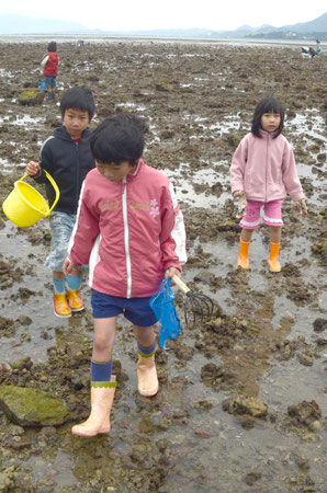 曇り・北風・低温にも負けず、元気に潮干狩りを続ける子どもたち=名蔵湾、14日午後2時ごろ。