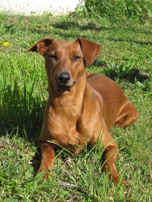 """Evi (Geburtsgewicht 160 Gramm) hat sich zu einer stattlichen """"Hundedame"""" entwickelt ;-)"""