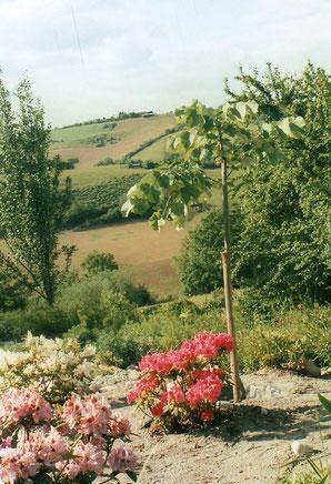 Rhododendron et l'arbre