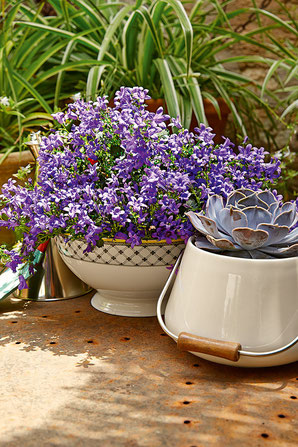 Salatschüssel & Blumentopf von Villeroy & Boch
