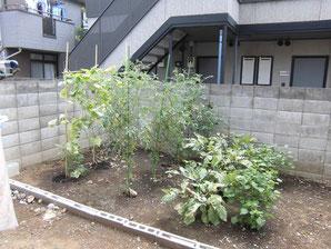 庭での家庭菜園の写真