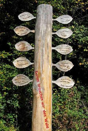 10 Gründe, warum wir den Wald brauchen - © Traudi