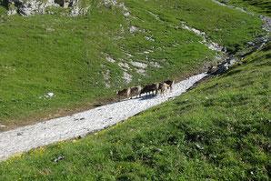 Klettern, Moor, Moorphium, Alpstein, Zustieg