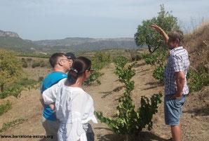 вино приорат экскурсии из барселоны, экскурсии из барселоны на винодельню