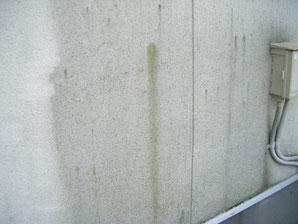 北側外壁のコケ発生状況。熊本のお家塗り替え時撮影。