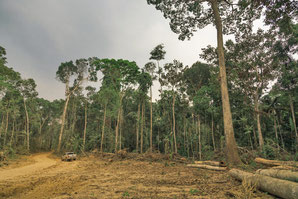 Comunidad de São Bernardo, Rio Branco, Amazonia. Brasil. Foto: Midia Ninja