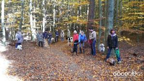 GOOD DOGS Hundeschule - Heusenstamm - Rodgau - Obertshausen - Erziehung - Hund - Spaziergänge
