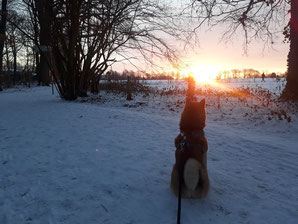 Shiba Edo san im Sonnenaufgang