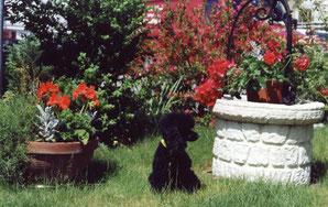 Romina im Garten
