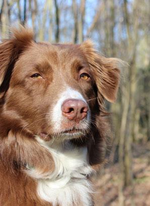 Schmerzbehandlung Hund Arthrose Hüftgelenkdysplasie Ellbogendysplasie Aggression Verhaltensstörung Fütterungsberatung Angst Katze Futterplan Schmerztherapie Verhaltenstörung chronische Erkrankung Niereninsuffizienz Allergie Futtermittelallergie Spondylos