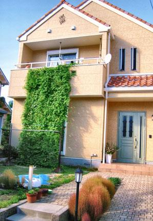 ゴーヤの緑のカーテン。外壁が結構汚れる。