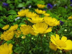 スタジオ近くの公園に咲いていたお花。他にも色々なお花。春の香り。とてもきれいでした。