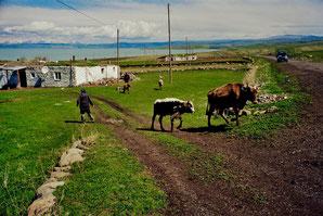 wir stoppten wegen der Kühe auf der Strasse