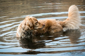 trotz arthrose in bewegung bleiben mit hundephysiotherapie