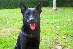 Stress Hund Hundephysiotherapie hilft