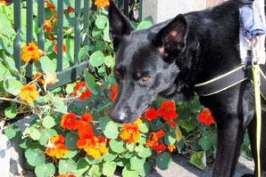 Arthrose beim Hund mit Hundephysiotherapie behandeln