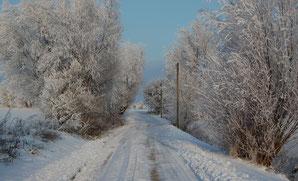 Weidenweg zur Ostsee