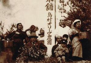 ▲1920年代の島村オリーブ園風景