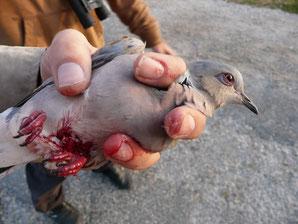 Wildtierauffangstation Kreis Düren verletzte Tiere verletzt Igel Eichhörnchen Amphibien Turteltaube NABU Düren