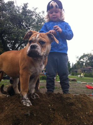 Continental Bulldog und Kind